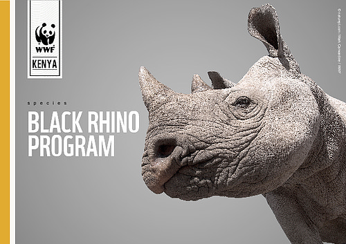 rhino conservation Black rhino conservation in namibia the black rhino population in namibia reached a critically low number in the 1980s due to aggressive poaching and a prolonged drought, which caused habitat loss save the rhino trust was established in 1982 in namibia's kunene area, a remote and hard-to-access mountainous desert region.