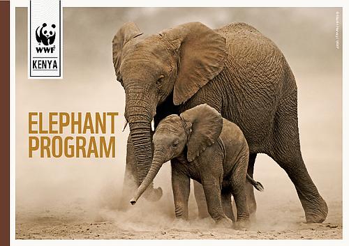 Elephant Conservation Programme Wwf Kenya